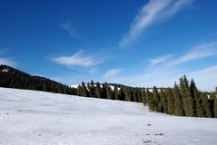 Snow forest. In XinJiang China Stock Photography