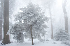 Snow in the forest Stock Photography