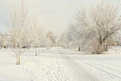 Snow forest alley. The trail stretches into the distance to a city Park. Snowy urban alley in winter. Trees covered with snow Royalty Free Stock Photography