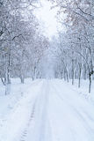 Snow forest alley. Winter park with snow trees and road at white. Cloudy sky Stock Photos