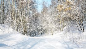 Snow forest in April Royalty Free Stock Photo