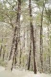 Snow Forest Stock Photos
