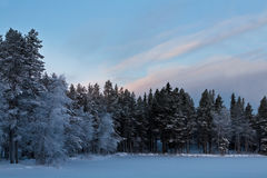 Snow forest and beauty sky. Cold forest. trees in snow Royalty Free Stock Photography