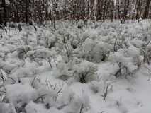 Snow in forest. Beauty white snow forest photo Royalty Free Stock Photos
