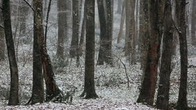 Snow in forest ( Belgrad Ormani ) in Istanbul. stock video footage