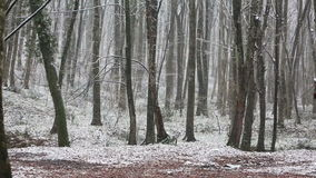 Snow in forest ( Belgrad Ormani ) in Istanbul. stock video