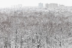 Snow forest and city in winter snowfall Stock Photo