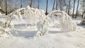 Snow forest in clear weather. trees bent under the weight of snow. Snow forest in clear weather. trees bent under the weight of snow stock video footage