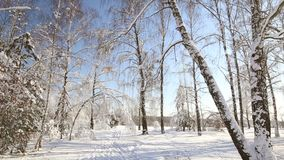 Snow forest in clear weather. trees bent under the weight of snow. Snow forest in clear weather. trees bent under the weight of snow stock footage