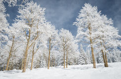 Snow forest Royalty Free Stock Photo
