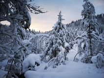 Snow in forest stock image