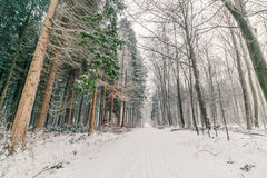 Snow in a forest in Denmark Royalty Free Stock Photos
