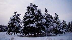 Snow in the forest of Europe stock photography