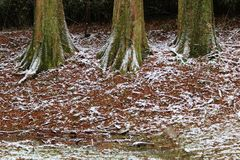 A dusting of snow on the forest floor. Snow on the forest floor after the winter storm in southern Japan stock image