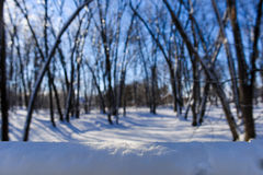 Snow in the forest Stock Image