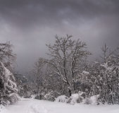 Snow in the forest near Varese, Italy Stock Photo