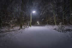 Snow in Forest at Night Stock Photos