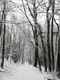 Snow on a forest path in Luxembourg stock images