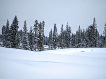 Snow forest scene Royalty Free Stock Photo