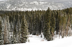 Snow forest scene Stock Photography