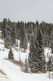 Snow forest scene Stock Photo
