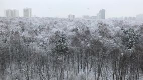 Snow forest snowfall high view day cloudy stock video footage