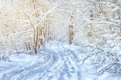 SNOW FOREST BY SUNDAY DAY. Snow-covered branches snow-covered road forest path blue hue the sun winter forest winter landscape royalty free stock images