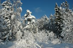 Snow forest on sunshine stock images