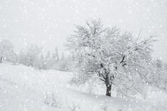 Snow in the forest Royalty Free Stock Photo