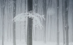 Snow in forest in winter Stock Photography