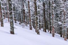 Snow, forest, winter Stock Image