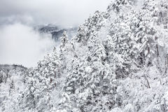 Winter landscape froest stock photos