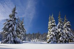 Snow, Forest, Winter, Nature, Trees Royalty Free Stock Photos