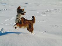 Snow frolics royalty free stock image