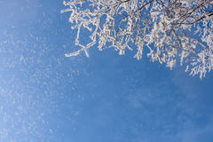 Snow-frost covered branch. Snow-frost branches in winter sun day Stock Images