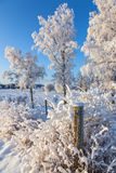 Snow and frost in rural winter landscape. Bushes with snow and frost in rural winter landscape Royalty Free Stock Photos