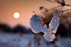Snow and frost at sunset. Wonderful sunset in the freezing cold and snow Stock Photos