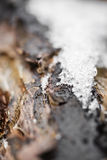 Snow and frost on tree bark in winter. texture Royalty Free Stock Photography