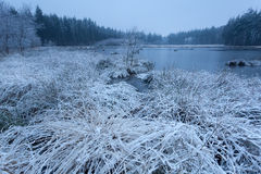 Snow and frost on wild forest lake Royalty Free Stock Photos