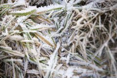 Snow on Frozen Grass Stock Photography