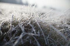 Snow on Frozen Grass Royalty Free Stock Images