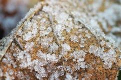 Snow on frozen leaf. Stock Photos