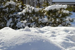 Snow and furs Stock Images