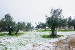 Snow in the Galilee Royalty Free Stock Images