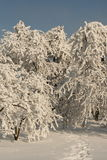Snow garden. Snow cover the village, frozen trees and bushes Royalty Free Stock Image