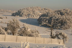 Snow in the garden. Snow cover the village, frozen trees and bushes, houses in snow Royalty Free Stock Image