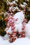 Snow in a garden Stock Image