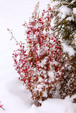 Snow in a garden Stock Images