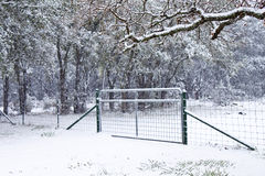 Snow on a gate with trees in Texas Royalty Free Stock Images