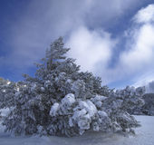 Snow giant. Big frozen tree under blue sky in winter Royalty Free Stock Photos